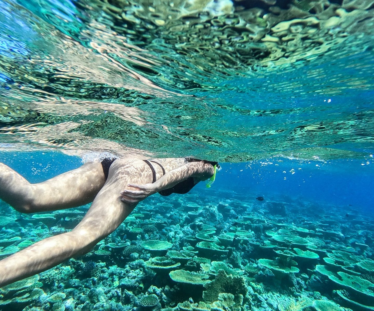 How Does Snorkeling Affect Coral Reefs