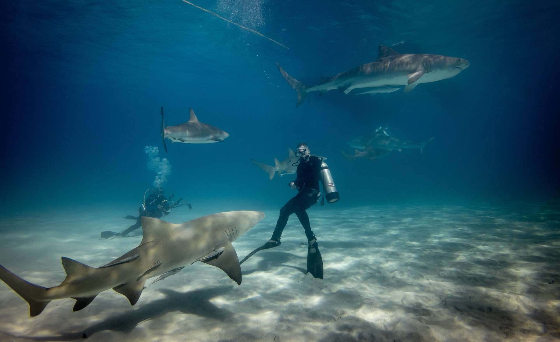 Are Sharks Scared of Scuba Divers
